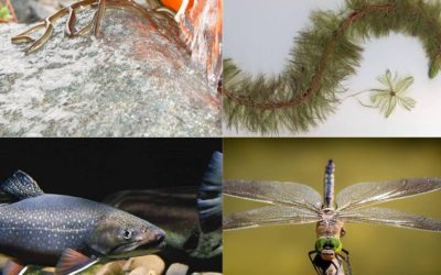 2019 Water Talks: A Free Series of Presentations by Experts in Their Fields